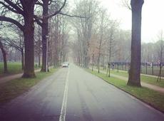 Bomen parkdreven
