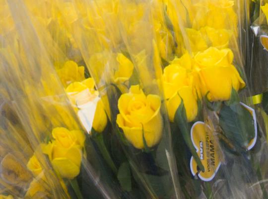 rozen voor moeders